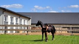 Eurofala – stajnia jak XIX wieczny dworek BIZNES, Infrastruktura - Konie wymagają odpowiednich warunków hodowlanych. Tylko nowoczesna i przestronna stajnia zapewni im odpowiedni komfort psychiczny niezbędny do prawidłowego rozwoju.