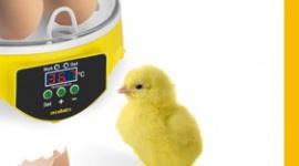 Incubato – nowoczesna inkubacja jaj dopasowana do wielkości fermy BIZNES, Gospodarka - Możliwość inkubacji od kilku do blisko 100 jaj jednocześnie, precyzyjna kontrola temperatury i wilgotności oraz nadzór nad prawidłowym przebiegiem rozwoju zarodka - inkubatory do jaj marki Incubato sprawdzą się zarówno w małym gospodarstwie agroturystycznym, jak i dużej fermie.