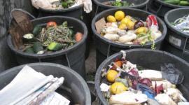 Czy można ograniczyć marnowanie żywności? BIZNES, Gospodarka - Podpisana ustawa o przeciwdziałaniu marnotrawienia żywności pozwoli na uratownie ok. 100 tys. ton żywności w dużych skelpach. Jednak marnowanie żywności to również problem społeczny.