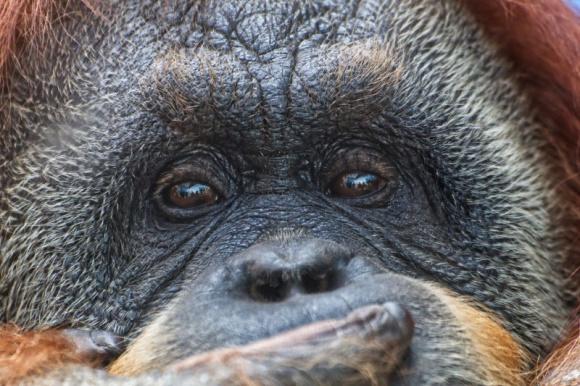 Olej palmowy. O co ten raban? BIZNES, Gospodarka - 1 lutego obchodzimy dzień bez oleju palmowego. Według raportu Frost & Sullivan w Polsce na jednego mieszkańca przypada aż 9,8 kilograma tego tłuszczu rocznie. Jest to najczęściej wykorzystywany olej roślinny na świecie, wg szacunków FAO wynika, że (...)