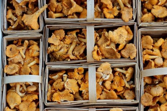 Sezon grzybowy także w logistyce - Fracht FWO dostarcza świeże kurki do USA Transport, BIZNES - Fracht FWO Polska, operator logistyczny dla przemysłu, rozwija usługi lotnicze w zakresie transportów drobnicowych i specjalnych. We wrześniu specjaliści z Działu Spedycji Lotniczej zorganizowali specjalny transport lotniczy, dostarczając do USA kilka ton świeżych grzybów.