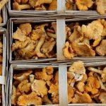Sezon grzybowy także w logistyce - Fracht FWO dostarcza świeże kurki do USA